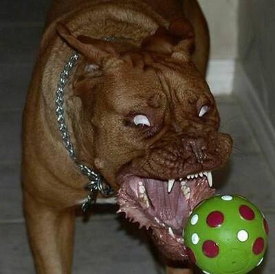 perro_peligroso